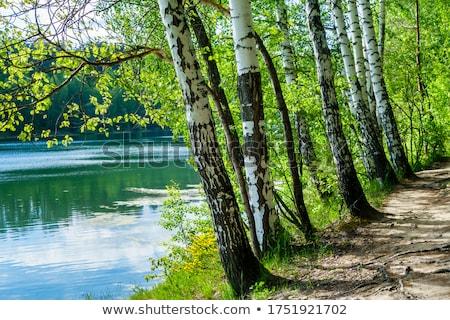реке · береза · деревья · дерево · трава · природы - Сток-фото © pbodig