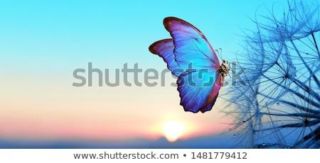 Bella farfalla fiore bianco foglia bellezza Foto d'archivio © taden