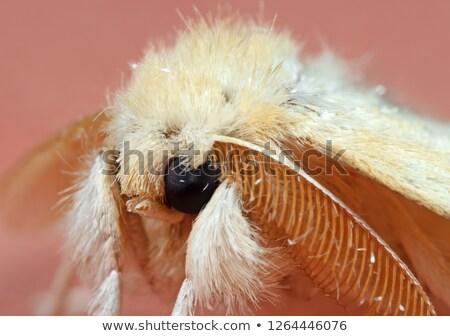 bruin · insect · geïsoleerd · textuur - stockfoto © foka