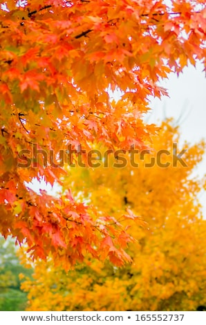 autumn colors within southern city limits in late november Stock photo © alex_grichenko