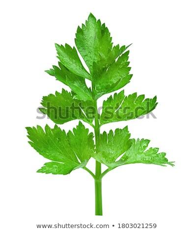fresh parsley leaf isolated on white background Stock photo © tetkoren