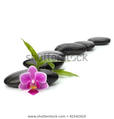 Shinny pebbles path. Spa and healthcare concept. Stock photo © natika