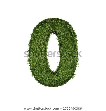 Green Creeper  Stock photo © scenery1