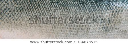 vis · huid · textuur · foto - stockfoto © kirpad