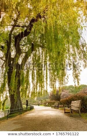 пути природы голландский небе трава Сток-фото © compuinfoto