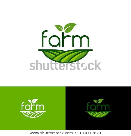 Verde saludable naturaleza agrícola logo negocios Foto stock © mcherevan