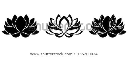 Lotus цветы силуэта иллюстрация воды Сток-фото © silverrose1
