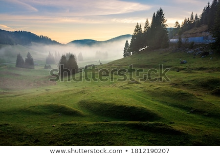Grassland and fog at dawn Stock photo © Juhku
