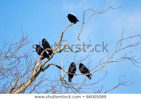 famiglia · gruppo · albero · top · nudo · rami - foto d'archivio © rekemp