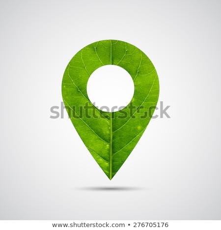 Verde pulsante foglie natura luce clean Foto d'archivio © vadimone