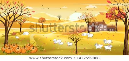 ősz birka mező farm Európa Stock fotó © chris2766
