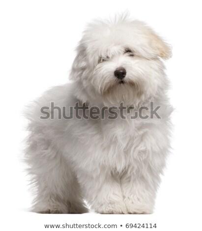 mão · desenho · retrato · cão · cabelo · pintar - foto stock © pavelmidi