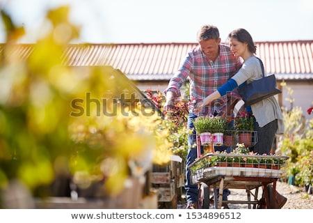 mature woman choosing plants at garden center stock photo © highwaystarz