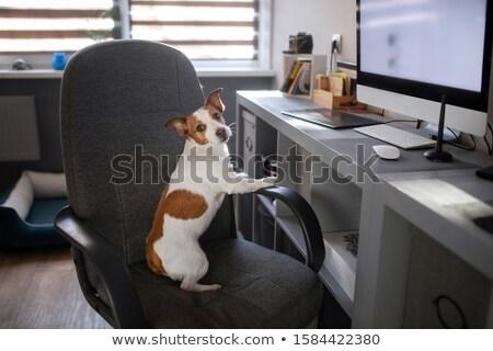 Işadamı oturma ofis koltuğu portre yakışıklı Stok fotoğraf © deandrobot