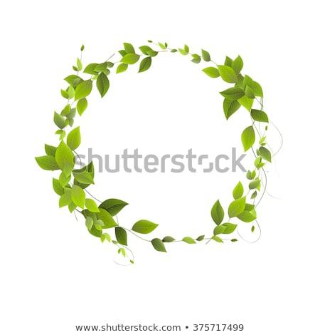 természetes · zöld · levél · kör · illusztráció · stílus · tökéletes - stock fotó © krustovin