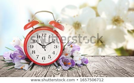 paars · witte · krokus · bloemen · gras · groep - stockfoto © mady70