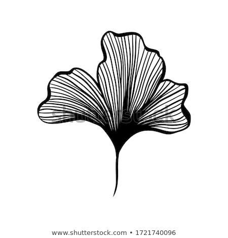 Bladeren abstract plant blad Stockfoto © sirylok