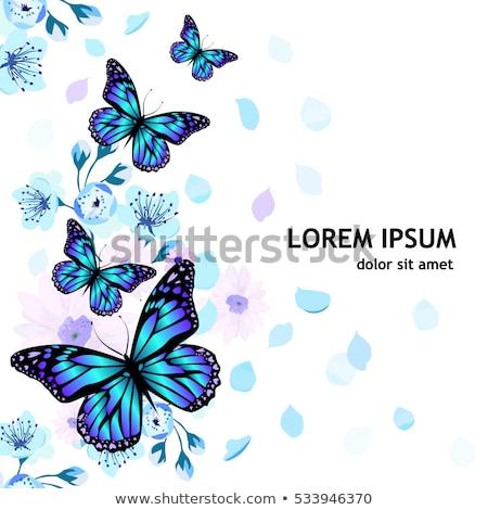 frontera · diseno · vid · mariposas · ilustración · flores - foto stock © bluering