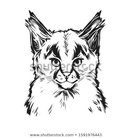 Macska kiscica vadállat rajz tetoválás vektor Stock fotó © Hermione