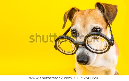 Stock photo: Dog with glasses