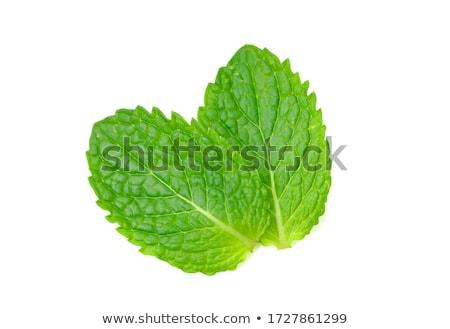 hortelã-pimenta · ver · planta · verde · folhas - foto stock © stephaniefrey