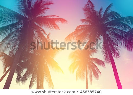 Sunset and palms in resort Stock photo © ssuaphoto