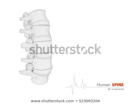 Illusztráció emberi gerincoszlop absztrakt tudományos 3d illusztráció Stock fotó © tussik