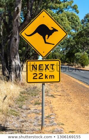 オーストラリア人 · 風景 · 草 · 日没 · 砂漠 · 夏 - ストックフォト © adrenalina