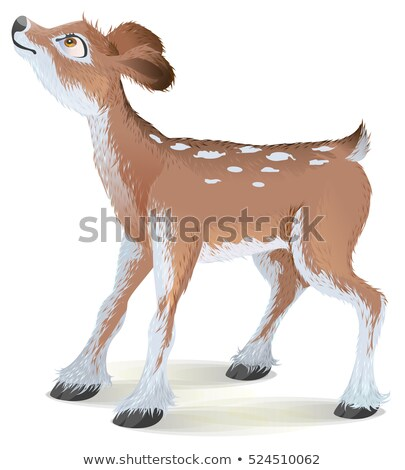 Brown small fawn raised his head up Stock photo © orensila