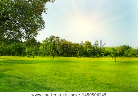 Grassy lawn Stock photo © liolle