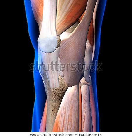 ferimento · lesões · joelho · cirúrgico · operação - foto stock © tussik
