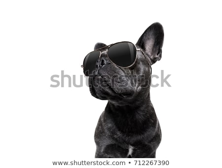 Stylish dog Stock photo © Shevs