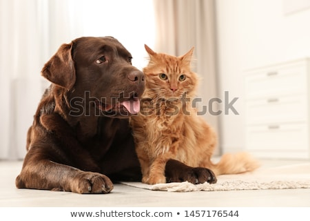 Home pets sitting  cat dog Stock photo © Olena