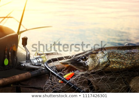 Successful fishing. Caught Pike fish and fishing tackle on woode Stock photo © Konstanttin