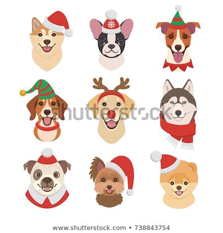 ストックフォト: 漫画 · 笑みを浮かべて · 冬 · 子犬 · 帽子 · 動物