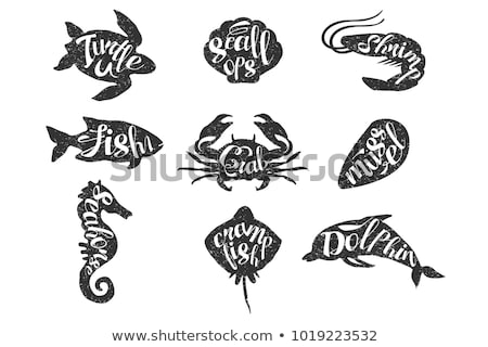 Shrimp and Scallop Posters Set Vector Illustration Stock photo © robuart