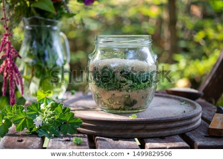 preparation of common mallow syrup in a jar stock photo © madeleine_steinbach