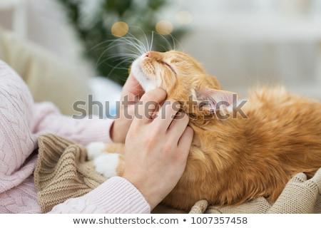 propietario · rojo · gato · cama · mascotas - foto stock © dolgachov