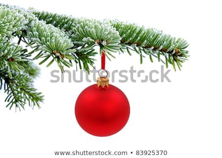 Rot Weihnachten Ball Zweig Schnee Stock foto © dolgachov