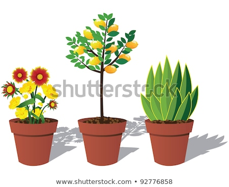 Open trunk with potted plants Stock photo © pressmaster