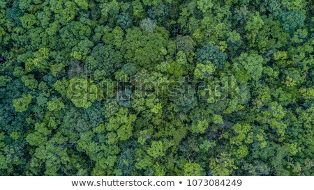 Pădure rezerva parc Tailanda cer copac Imagine de stoc © nuttakit