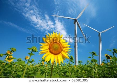 aerogenerador · campo · coche · carretera · paisaje · montana - foto stock © ansonstock