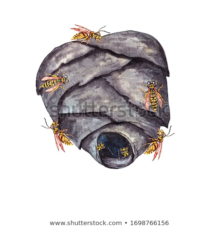 Stock photo: head of wasp in grey background