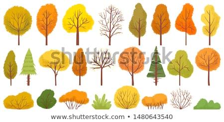 Güzel sonbahar ağaç vektör yaprak Stok fotoğraf © Hermione