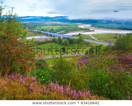 summer heather flower hill and misty morning country view behind stock photo © wildman