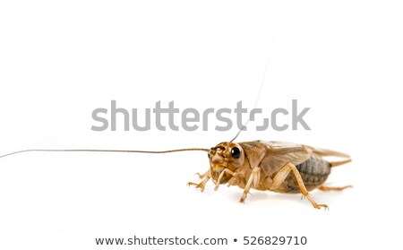 brown bug in natural back Stock photo © prill