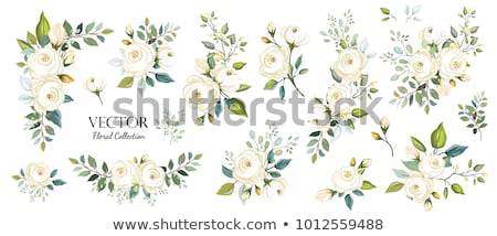 White flower with green leaf Stock photo © boroda