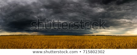 Stormy skies over the field. Stock photo © justinb