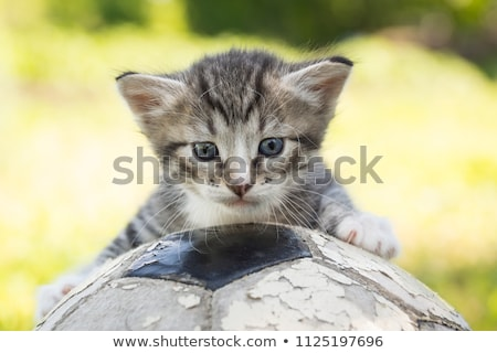Weinig kat spelen voetbal groot groet Stockfoto © involvedchannel