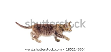 kitten paw bottom up Stock photo © prill
